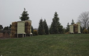 Bee hives filled with hibernating bees