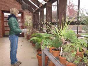 Lisa Hilgenberg in the herb greenhouse